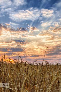 harvest sunrise by DimitrisKoskinas. Please Like http://fb.me/go4photos and Follow @go4fotos Thank You. :-)