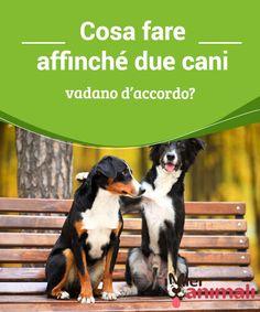 Cosa fare affinché due cani vadano d'accordo? Ogni #cane ha un #carattere ed una #personalità diversa, dunque non è così facile che vadano d'accordo. Cosa può rendere #tranquilla la convivenza tra cani. #Consigli