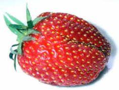 Strawberry: Delaware State Fruit