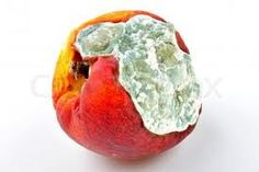mouldy fruit - Google Search