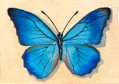 Blue Butterfly  Original Watercolor