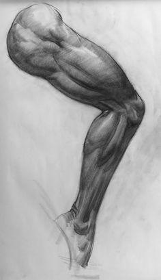 leg anatomy: