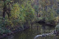 Allen's Creek at Ellison Park in Rochester NY by William  Norton