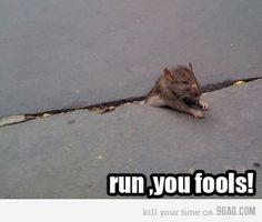I wonder if he turns into a white rat?