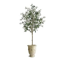 "70"" Potted Olive Tree"