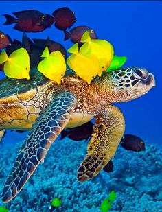 Sea Turtle Wallpaper, Sea Turtle Pictures, Animal Noses, Life Under The Sea, Underwater Sea, Turtle Love, Marine Aquarium, Deep Blue Sea, Colorful Animals