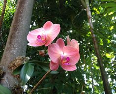 Orchids literally grow on trees in Key West. We have a three part blog post on our amazing trip there.