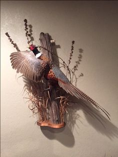Taxidermy Decor, Taxidermy Display, Bird Taxidermy, Hunting Trips, Hunting Cabin Decor, Pheasant Mounts, Duck Mount, Deer Camp, Trophy Rooms