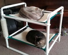 http://www.roverpet.com/blog/wp-content/uploads/2013/02/indoor-cat-bunk-hammock.jpeg
