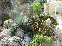 Jardin de Monaco . - exotique cactus