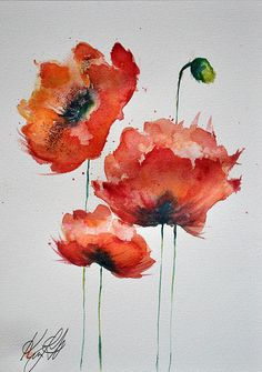 Red Poppies By Kym Steel