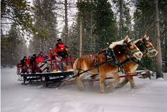 Take a mountain sleigh ride in the crisp, fresh air and powdery snow of the Rocky Mountains at YMCA of the Rockies Snow Mountain Ranch. Afterwards, try some Nordic skiing, snow tubing, sledding, snow-shoeing or ice skating. Cabins, yurts or lodges available. #tmom
