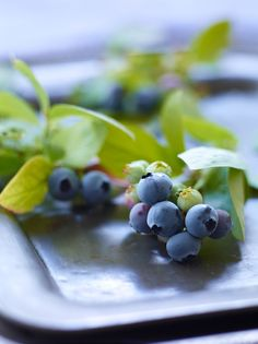 vinography and the Essence of wine, blueberries!