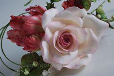 Rose & Parrot Tulip