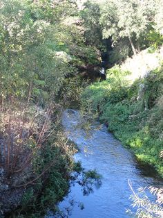 Wekiva River 4 13 Nov 2011