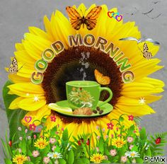Start your day with sending beautiful Good Morning GIFs. Send Funny Morning Love GIFs, Pictures, animated morning flower GIFs to share with your friends and family members. Find Funny GIFs, Cute GIFs, Reaction GIFs and more. Good Morning Sister, Good Morning Wednesday, Cute Good Morning Quotes, Good Morning Happy, Good Morning Picture, Good Morning Flowers, Good Morning Messages, Good Morning Greetings, Morning Pictures