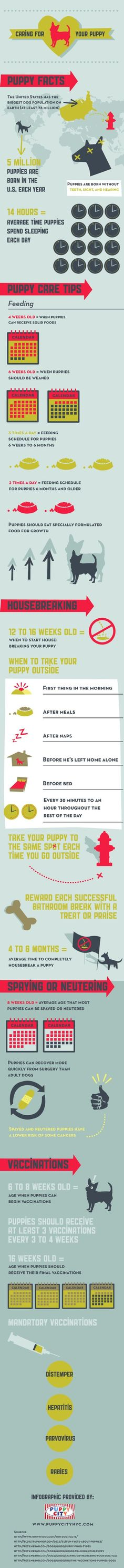 Did you know that the U.S. has the largest population of dogs of any country? There are at least 78 million dogs here! Explore this infographic for more fun puppy facts and tips for caring for your new Maltese puppy.