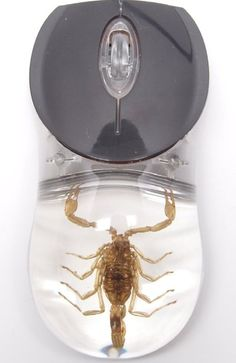 Gift idea: Computer Mouse Golden Scorpion Clear