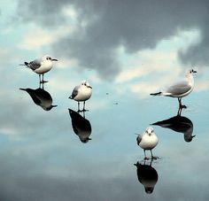 Gulls by Helgi Skulason, via Flickr