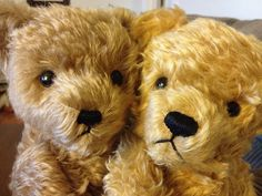 Angus met Deiter today. by Bears In The Yard, via Flickr