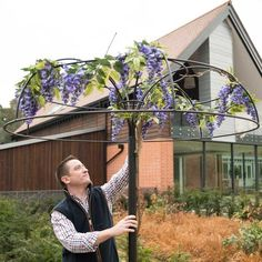 The Harrod Wisteria Umbrella Support Frame is an eye-catching plant support and will create a stunning display of all manner of flowering climbing plants, a beautiful addition to any garden. Wisteria Trellis, Wisteria Tree, Wisteria Pergola, Garden Trellis, Garden Stakes, Wisteria Wedding, Pergola Swing, Pergola Roof, Pergola Ideas