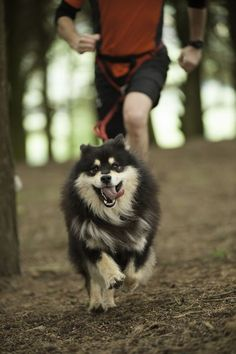 Tuulikki Finnish lapphunds - Home