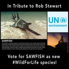 Leonardo DiCaprio: A great way to pay tribute to the late Rob Stewart.The UN is