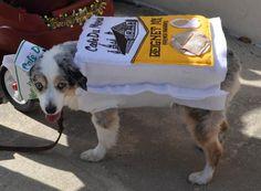 Cafe du Monde Dog Costume : Beignet Mix :) Beignet Mix, Beignets, Dog Costumes, Dog Halloween, Mardi Gras, New Orleans, Pugs, My Style, Clothes