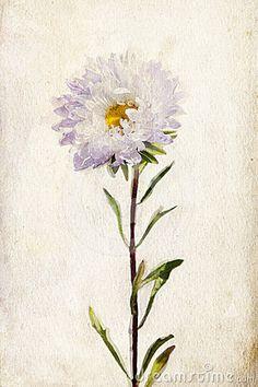 watercolor-lilac-aster-24291060.jpg (300×450)