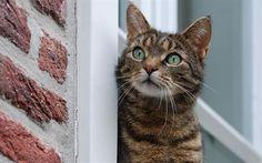 壁紙をダウンロードする ペットの猫, 窓, 見