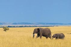 Why go on a safari when you can watch wildlife right from the comfort of your hotel?