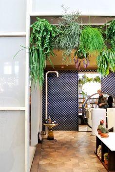 〈サボテン〉以外は、全て吊り下げて、すっきりとした室内に。  生命感溢れた、吊るされた緑。  植物を統一すると単調に。種類を違えて色々と。