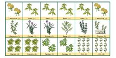 Square Foot Gardening Chart   square foot garden guide for our school garden?   gardens.....!!♥