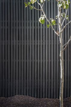 Black timber lattice is often used by B.E Architecture for fences around internal terraces Timber Battens, Timber Screens, Timber Fencing, Detail Architecture, Garden Gates And Fencing, Tor Design, Black Fence, Black Garden Fence, Fence Screening