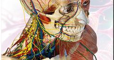 Educational Technology and Mobile Learning: Great Websites to Teach Anatomy of Human Body in 3D