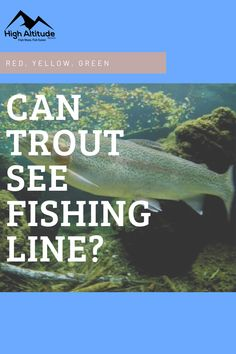 It has long been debated what fish can actually see and how they view it. When it comes to colors, many anglers are not sure what color of line is best used when fishing for trout. Can trout see fishing line colors? Fishing Line, Best Fishing, Trout Fishing Tips, Fishing Techniques, Things To Come, Canning, Colors, Green, Colour