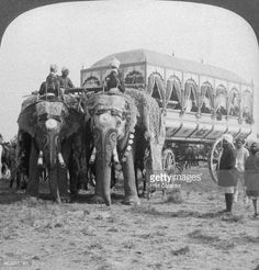 Richly adorned elephants and carriage of the Maharaja of Rewa at the... Pictures | Getty Images