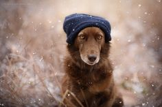 Always something special - first snowfall by Anne Geier - Photo 129749785 - 500px