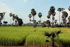 """Résultat de recherche d'images pour """"kampong cham"""""""