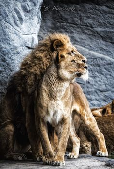 """The King and his loyalty in a majestic light. <a href=""""http://www.facebook.com/JPhotoR"""">Facebook</a> 