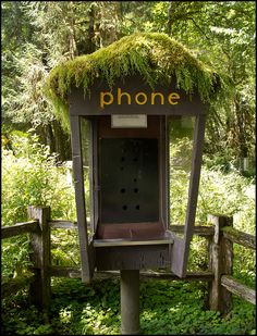 Pay phones, a relic of the past wired world, covered with moss near the ranger station in Olympic National Park.     Hmm I like