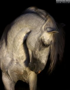 In this album you can find the most interesting and striking photos of horses, selected from all other galleries of this website. But feel free to visit other galleries and explore more!