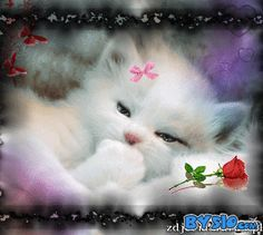 """kitty """"Goodnight"""" say me bye-bye 💕 Turkish Angora Cat, Angora Cats, Kittens And Puppies, Cats And Kittens, Cute Baby Animals, Animals And Pets, I Love Cats, Cute Cats, Photos Encadrées"""