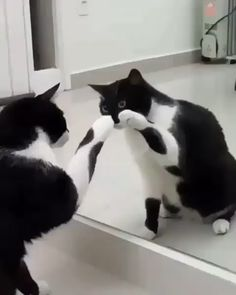 How Cute Cat acting is funny video - Gatos - Animal Cute Funny Animals, Cute Baby Animals, Animals And Pets, Funny Cats, Funny Humor, Cats Humor, Cute Cat Gif, Animals Images, Wild Animals