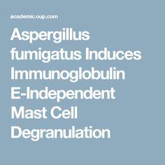 Aspergillus fumigatus Induces Immunoglobulin E-Independent Mast Cell Degranulation