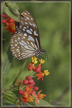 butterfly,  Vanasthali National Park, Hyderabad, India