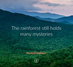 A drowsy herbivore, a carnivorous plant, an elusive prowler... a cure for cancer? Will we get a chance to find more of what the rainforest holds? That's up to you. Click to explore the mysteries held in rainforests and learn how you can help protect the plant and animal species that are disappearing every day due to deforestation.