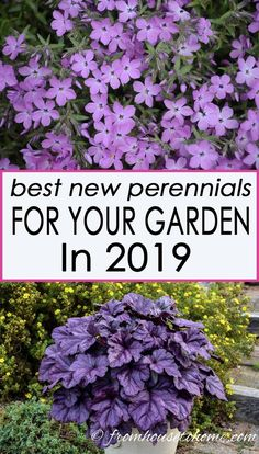 The Best New Perennials and Shrubs For 2019 I love these new perennial varieties that will be available in Some have beautiful flowers while others have gorgeous leaves, some grow in the sun while others like the shade, and there are even some re-blo Part Shade Perennials, Best Perennials, Flowers Perennials, Shade Plants, Planting Flowers, Flower Gardening, Full Sun Perennials, Purple Perrenial Flowers, Full Sun Shrubs