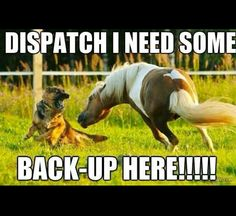 Dispatch I need some back-up here