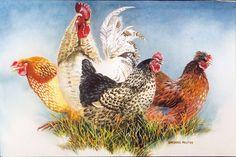 Garden Fowls